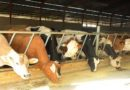 Le directeur des services vétérinaires affirme que la wilaya d'Alger n'était pas un foyer de la fièvre aphteuse